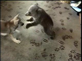 bearwolf.jpg